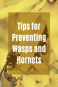Tips-for-Preventing-Wasps-and-Hornets-