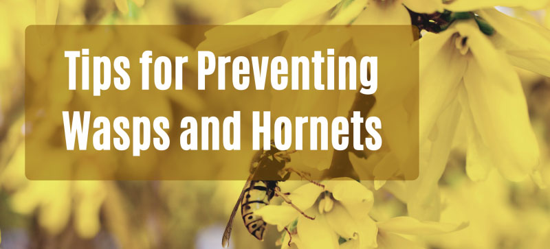 Tips-for-Preventing-Wasps-and-Hornets-Header-Gutter-Cleaning
